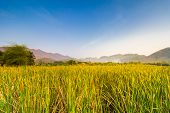 image of bulrushes  - Mountain and sky view at reservoir that full with bulrush or Cat - JPG