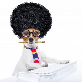 stock photo of secretary  - jack russell secretary dog booking a reservation online using a pc computer laptop keyboard with crazy silly afro wig pencil in mouth isolated on white background - JPG