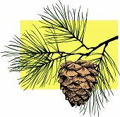 pic of pine cone  - EPS vector illustration depicting the cedar cones for registration books and for advertising purposes - JPG