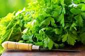 picture of cilantro  - Green Cilantro herb And Knife on table.