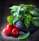 Basil and tomatoes on wooden table. Italian Homemade Food ingredients still life. Cherry tomatoes, f poster