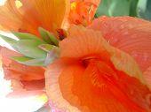 Tropical Orange Flower poster