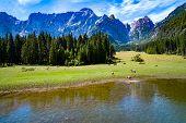 Horses graze on green field. Lake Lago di Fusine Superiore Italy Alps. poster