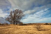 pic of nouns  - Dune landscape on shore of the Baltic Sea - JPG