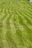 Striped Field, Grass Mowed By Uneven Stripes Of Different Shades Of Green. Curved Stripes Of Mowed G poster