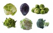 Various Cabbages Isolated On White Background. Brussels Sprouts, Broccoli, Cabbage Romanesco, Caulif poster