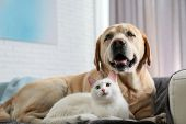 Adorable Dog And Cat Together On Sofa Indoors. Friends Forever poster