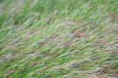 Grass, Flower Grass Field Background Morning Grass Wind Blew Gently Touched Meadow Close Up Scene, D poster