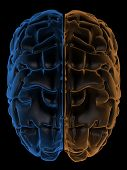 picture of temporal lobe  - 3D Rendering  of the two Hemispheres of the brain top view - JPG