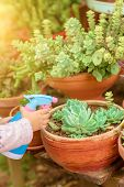 Close Up Of Hand Of Child Holding Container And Sprinkling Water On Plant. Candid Cozy Image Little  poster
