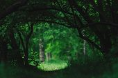 Atmospheric Dark Green Landscape With Fancy Tree Branches. Dark Woodland Vegetation Tunnel. Sunny Me poster