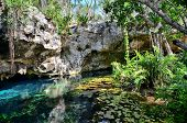 picture of cenote  - Gran Cenote - JPG