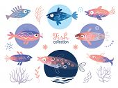set of fishes, sea creatures, illustrations on white background poster