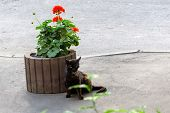 Unhappy Sick Black Cat Sitting Near A Flower Bed. Homeless Animals poster