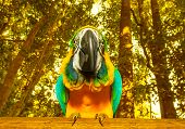 picture of parakeet  - Photo of South Africa beautiful bird - JPG