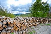picture of afforestation  - Sawed Firewood Dropped High Up in the Italian Alps - JPG