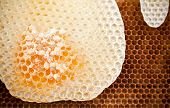 Fresh Honeycomb Background Texture