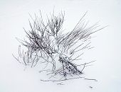 Winter, Snow Drifts, Plant In The Snow Background