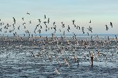 picture of flock seagulls  - Flock of Seagull are flying at Bangpoo Thailand - JPG