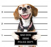 image of felons  -  a mugshot of a bad dog  - JPG