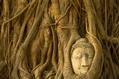 stock photo of expressionism  - Buddha in roots of the tree in Ayutthaya - JPG