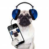 image of dog eye  - pug dog listening to music from smartphone or player eyes closed - JPG