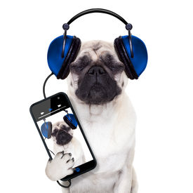 stock photo of lp  - pug dog listening to music from smartphone or player eyes closed - JPG