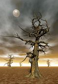 foto of moonlight  - Dead trees by moonlight  - JPG