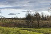 image of apple orchard  - Rows of apple trees blooming on a countryside orchard during springtime - JPG