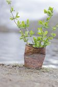 image of polution  - Fern growing in rusty can lakeside on an overcast day - JPG