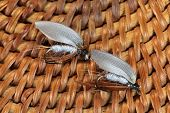 picture of trout fishing  - Macro photo of an artificial fly for fly fishing on a basketwork background - JPG