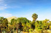 foto of arid  - Arid desert garden against a sky backdrop - JPG