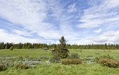 image of pastures  - A shieling - JPG