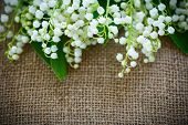 foto of day-lilies  - bouquet of lily of the valley flowering in the table of burlap - JPG