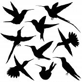 picture of hummingbirds  - Hummingbird Silhouette - JPG