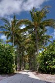 picture of lighthouse  - Palm Trees Framing Walkway To Cape Florida Lighthouse - JPG