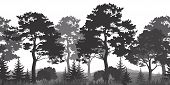 picture of fir  - Seamless Horizontal Summer Forest with Pine - JPG