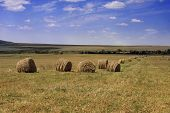 image of hay bale  - Packad hay bales spread on the fields of countryside - JPG