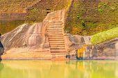 pic of mountain lion  - Sigiriya - JPG