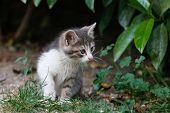 image of baby cat  - Kitten - JPG