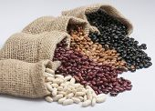 foto of kidney beans  - White beans, kidney beans, pinto beans and black beans, in small bags.