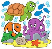 stock photo of aquatic animal  - Sea animals thematic image  - JPG