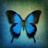 stock photo of blue butterfly  - Vintage background with blue butterfly - JPG