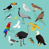 Постер, плакат: Collection of Various Birds Flat Design
