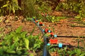 Drip Irrigation System. Watering System In The Garden poster