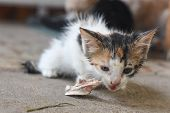 Scary Abandoned Kitty Wet And Hungry. Little Kitten Eat A Bone, Feeding Abandoned Animals poster