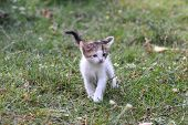 Curious Little Kitten Play In The Grass. Little Kitty Play Outside poster
