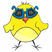 animal domestic chicken bird with sunglasses poster