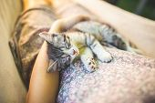 Cute Grey Cat Lying On Its Owners Knees, Close Up View. Woman In A Dress With Sleeping Kitty Lying  poster