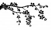 stock photo of black-cherry  - Black branch of beautiful seasonal cherry blossom - JPG